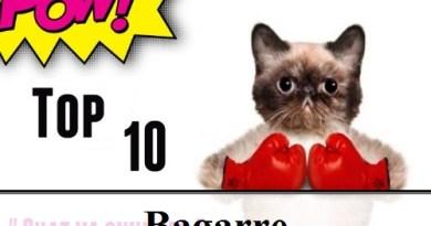 Top 10 : Les meilleures vidéos de combats de chats