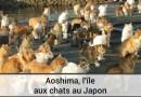Aoshima, l'île aux chats au Japon