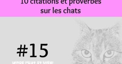 #15 – 10 citations et proverbes sur les chats