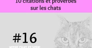 #16 – 10 citations et proverbes sur les chats