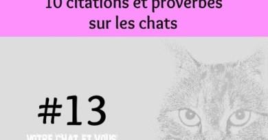 #13 – 10 citations et proverbes sur les chats