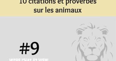 #9 – 10 citations et proverbes sur les animaux