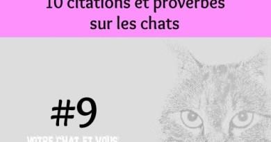 #9 – 10 citations et proverbes sur les chats
