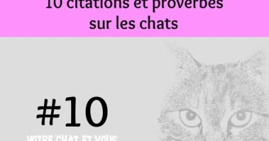 #10 – 10 citations et proverbes sur les chats