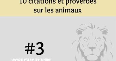 #3 – 10 citations et proverbes sur les animaux