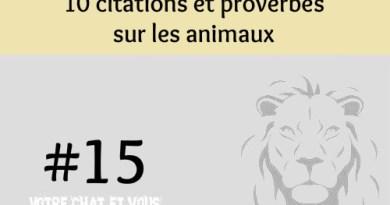 #15 – 10 citations et proverbes sur les animaux