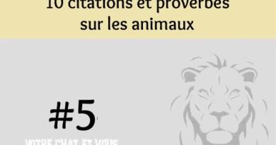 #5 – 10 citations et proverbes sur les animaux