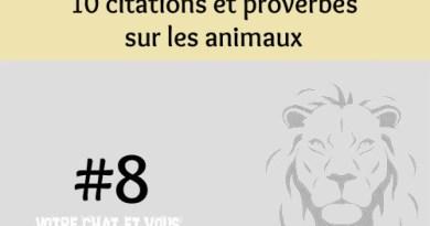 #8 – 10 citations et proverbes sur les animaux