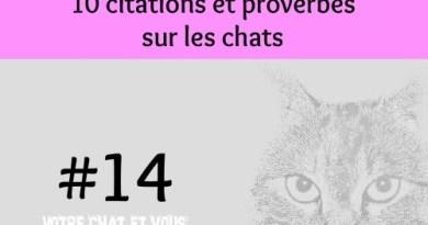 #14 – 10 citations et proverbes sur les chats