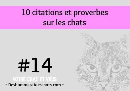 14 10 citations et proverbes sur les chats des hommes et des chats. Black Bedroom Furniture Sets. Home Design Ideas
