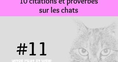 #11 – 10 citations et proverbes sur les chats
