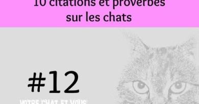 #12 – 10 citations et proverbes sur les chats