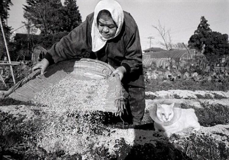 cat kittens images amusantes photos amusantes photo amusante humour images photo chat des hommes et des chatons image noir et blanc photo noir et blanc photographie noir et blanc photo noir blanc image en noir et blanc portrait noir et blanc (6)