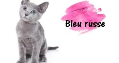 Chat rigolo image drole de chat marrant photos de chats - Chaton marrant ...