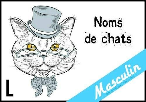 Liste des noms en l pour un chat m le des hommes et des - Photo de chat rigolo ...