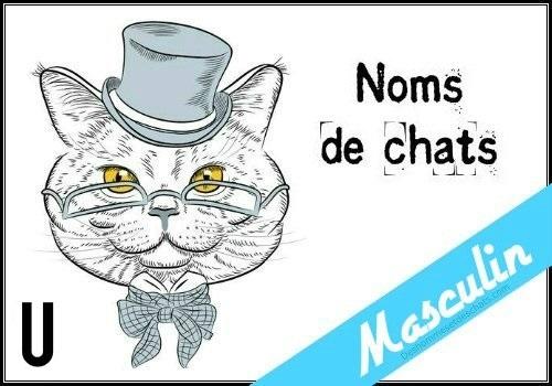 Photo Chaton Mignon Chat Mignon Les Photso Des Chats Photo
