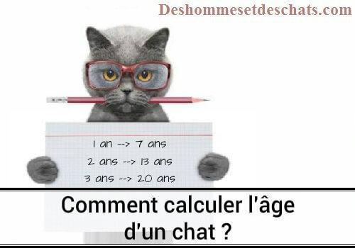 Comment Calculer Age Chien comment calculer l'âge d'un chat en âge humain | des hommes et des chats