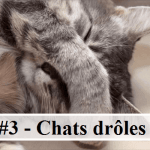#3 – 10 photos de chats drôles