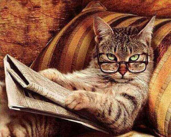 image-chat-drole-photo-chat-mignon-photo-d-animaux-image-chaton-mignon-image-drole-chat-image-de-chat-rigolo-photo-chaton-mignon-les-photos-des-chats-image-des-chats