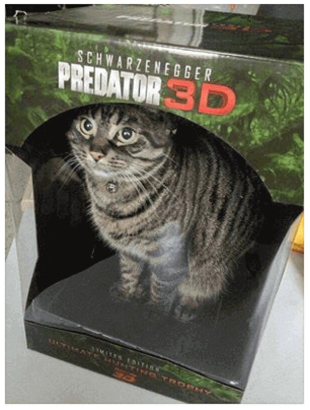 #3 - 10 photos de chats drôles | Des hommes et des chats