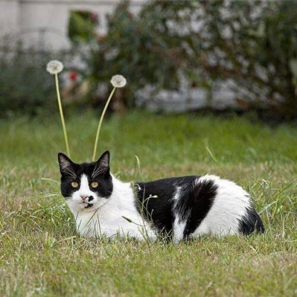 photo-chat-marrant-chaton-image-chaton-photo-photo-rigolote-de-chat-chaton-rigolo-animaux-rigolo-chat-rigolo-image-les-chat-rigolo-les-chats-rigolos-chat-image