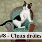#8 – 10 photos de chats drôles