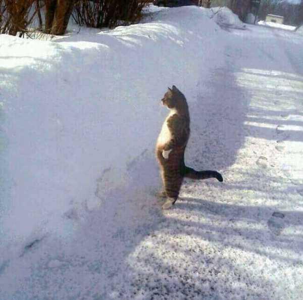 photo-chat-marrant-chaton-image-chaton-photo-photo-rigolote-de-chat-chaton-rigolo-animaux-rigolo-chat-rigolo-image-les-chat-rigolo-les-chats-rigolos-foto-de-chat