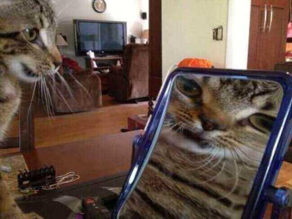 photo-chat-marrant-chaton-image-chaton-photo-photo-rigolote-de-chat-chaton-rigolo-animaux-rigolo-chat-rigolo-image-les-chat-rigolo-les-chats-rigolos-image-de-petit-chaton