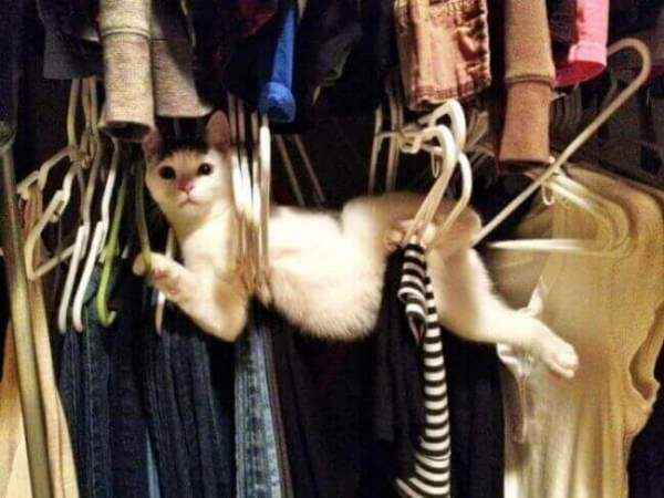 photo-chat-rigolo-photo-de-chaton-image-de-chat-rigolo-chat-comique-photo-animaux-photos-de-chats-rigolos-photo-de-chat-images-chatons-image-de-chat-image-de-chaton