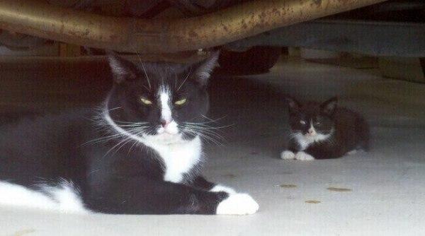photo-de-chat-mignon-chat-drole-photo-animaux-photo-de-chaton-photo-mignonne-image-chaton-chat-rigolo-foto-de-chat-photo-de-chatons-petit-chat-mignon-chats-droles-photo-chat-drole