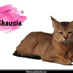 Le Chausie