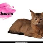 Le Chausie