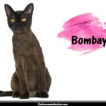 Le Bombay