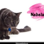 Le Nebelung