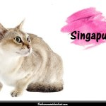Le Singapura