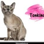 Le Tonkinois