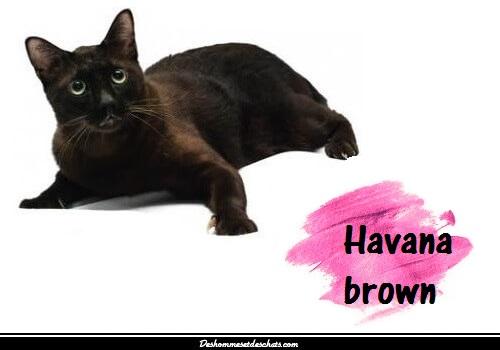 Vieux tube de chatte noire