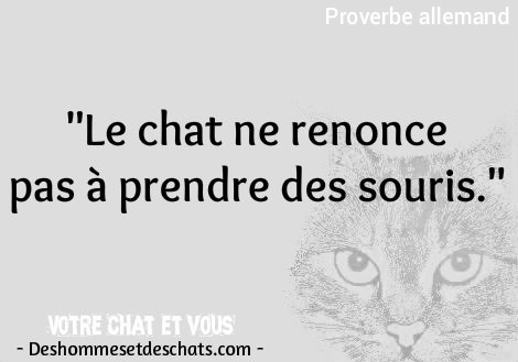 Animaux Drole Adage Chat Image Chaton Dicton Citations