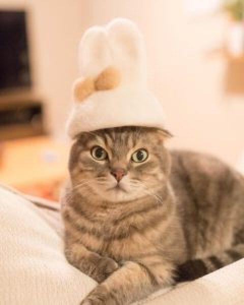 4 fabrication de chapeaux en poils de chat des hommes - Photo de chat rigolo ...