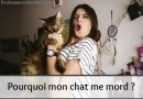 Comportement du chat qui mord