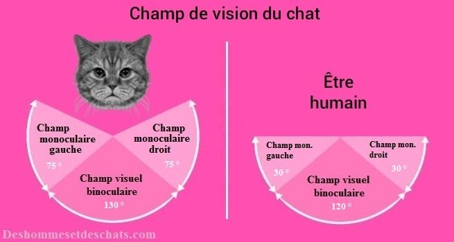 Les Yeux Du Chat La Vision Du Chat Vue Chat Yeux Chat Oeil De Chat