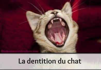 La dent du chat