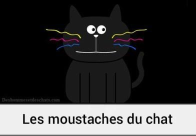 A quoi servent les moustaches des chats ?