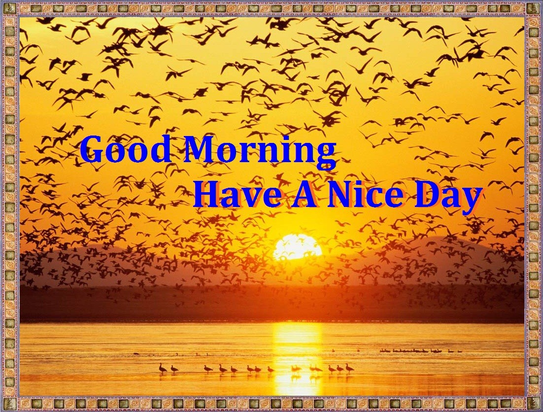 Good Morning Sun Quotes Quotesgram