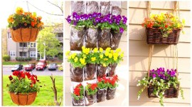 Bloom this spring with low budget tulip garden!!