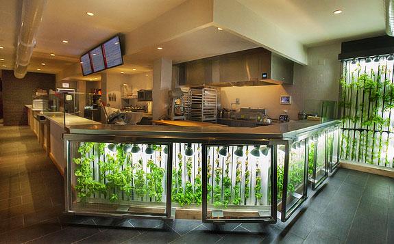 vertical gardens - growing organic food onsite