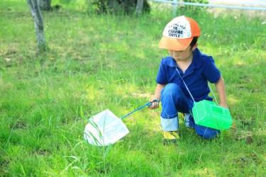 カブトムシの虫かごの掃除方法とマット交換のタイミング