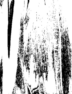Woodcut Black and White very light scan