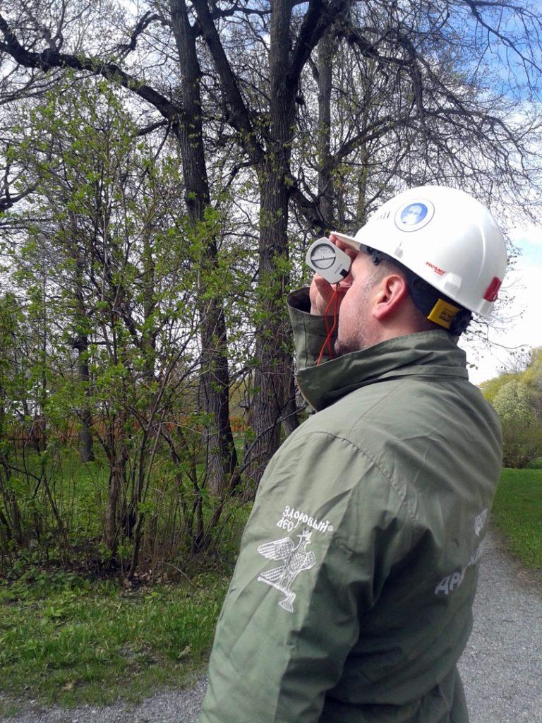 Визуальное обследование дерева