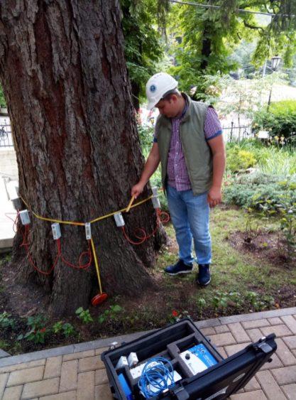 обследование деревьев. Арботом